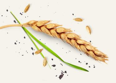nasiona-prawa-strona